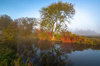Colorful trees in the mist at Paar river near Schrobenhausen, Bavaria, Germany in autumn