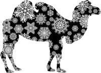 Christmas card camel in snowflakes on a white background