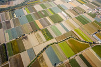 colorful farm with vegetables and rice