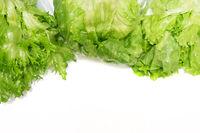 Green lettuce group set