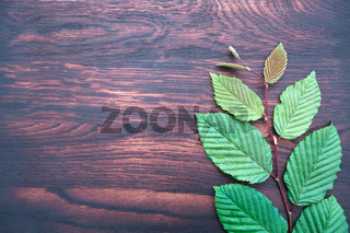 Green leaves on brown wooden background.Top view.Copy space
