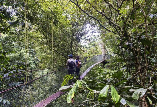 Mulu Baumkronenpfad, Canopy Walkway, Gunung Mulu Nationalpark, Sarawak, Borneo, Malaysia