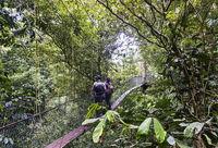 Canopy Walkway, Gunung Mulu Nationalpark, UNESCO Weltnaturerbe, Sarawak, Borneo, Malaysia