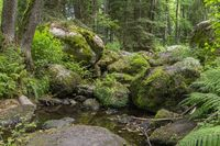 nature reserve in the Bavarian Forest