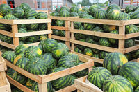 Crates of Watermelons