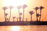 Silhouettes of palm trees growing on island in sea at sunrise. Dawn over tropical island. Sunset ove