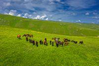 herd of horses grazing on slope meadow