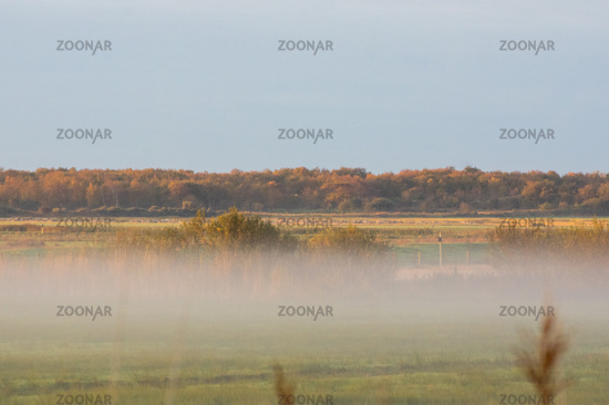 Morning mist on meadows and a beautiful landscape