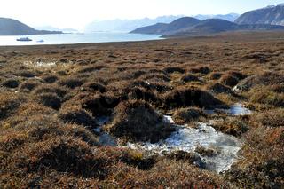 Gefrorene Tundra am Sydkap, Scoresby Sund, Ost-Grönland, Scoresby Sund