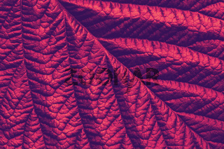 red maroon macro leaf texture, abstract floral background