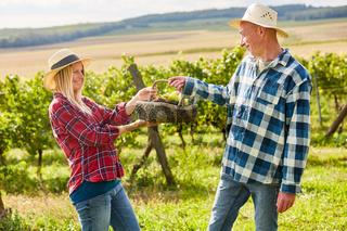 Paar macht Ausflug mit Picknickkorb im Weinberg