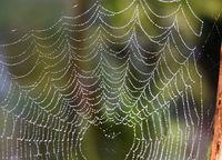 Spinnwebe, Gegenlicht, Nebel