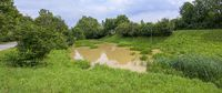 water course of the brook small Tulln