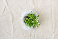 Blossoming green plant with tender flowers in a plastic bag. Top view.