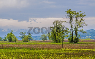 Naturschutzgebiet Greifensee Kanton Zürich, Schweiz