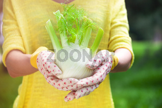 Woman holding fennel bulb in garden