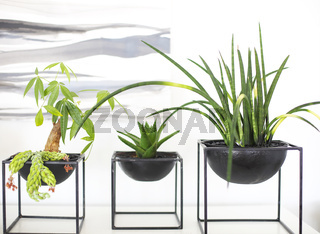 Modern pots with green growing plants