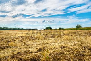 Plowed wheat field