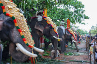 Elephant Parade in Varkala, India