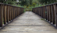 Wooden Bridge Pathway