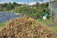 Dutch allotment garden in autumn with heap of garden waste