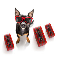dog on vacation  holidays and luggage bag