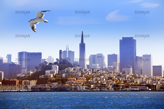 Seagull flying over the bay on the background of San Francisco
