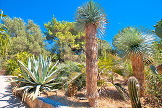 Palmizana on Pakleni Otoci islands mediterranean botanical garden view