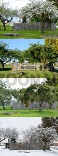 alter Apfelbaum in allen vier Jahreszeiten