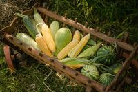 Autumn harvest concept. Melon, zucchini, watermelon in old wooden trolley on green grass. Close up shot. Top view
