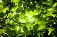The light of the sun breaks through the dense foliage.