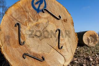 Baumstamm Buche Rohstoff Holz