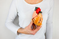 Person holding human heart model on white body