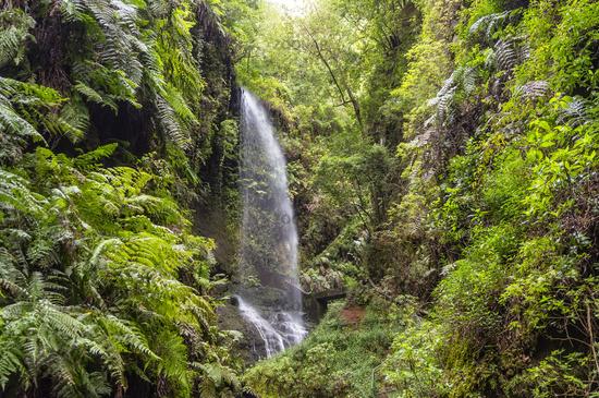 Waterfall of Los Tilos on La Palma