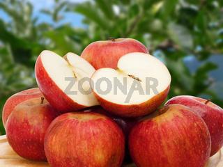 apple in the garden