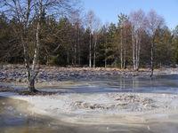 Überschwemmung durch einen Biberdamm