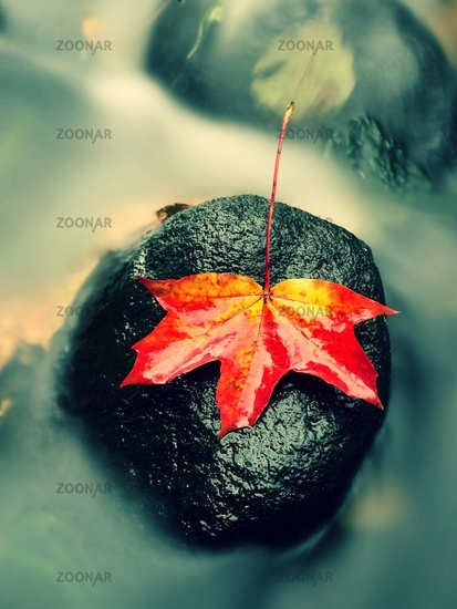 Autumn nature. Detail of rotten orange red  maple leaf. Fall leaf lay on dark stone in blurred mirro