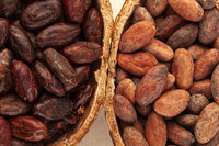 Detail of unpeeled and fresh roasted cocoa beans in a pod.