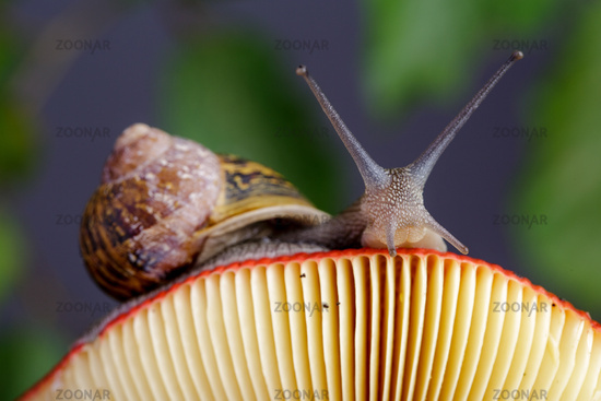 Snail in Summer Garden