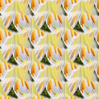 Seamless abstract springtime, summer natural background of blooming lilies.