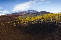 Kraterlandschaft des Teide Nationalparks, Teneriffa