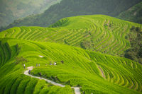 Walking path through Longji Rice Terraces