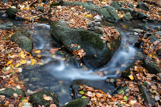 little stream in the Harz Mountains