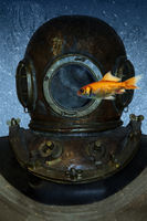 Goldfish and diving helmet