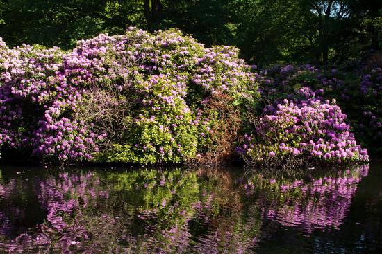 Tiergarten 022. Germany