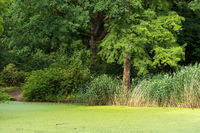 Tiergarten 025. Germany