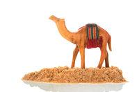 Camel in the dessert