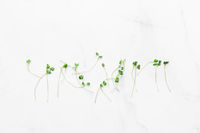 Micro greens sprouts on white marble background. superfood concept
