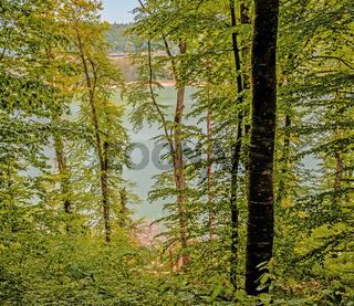 Frühling auf dem Bodanrück, Landkreis Konstanz
