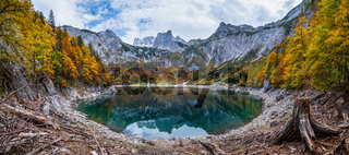 Tree stumps after deforestation near Hinterer Gosausee lake, Upper Austria. Autumn Alps mountain lake with clear transparent water and reflections. Dachstein summit and glacier in far.